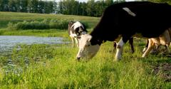 Sustainable Beef Supply Chain